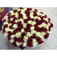 Благоухающая красавица (101 красная и белая роза)