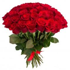 Алые розы 37 шт