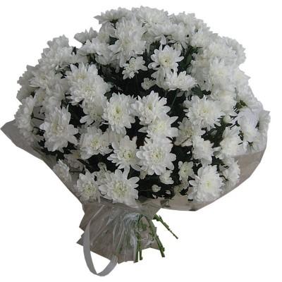 """Букет """"Стройная"""" Хризантемы кустовые белые 21 шт"""
