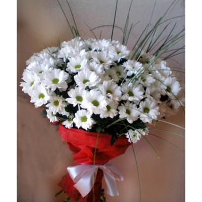 Хризантемы кустовые ромашковые 11шт