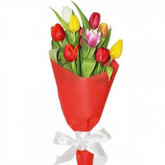Маргаритка Тюльпаны