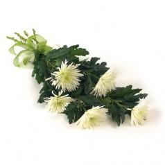 Букет хризантем Игольчатая