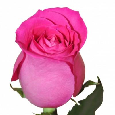 Топаз (1 роза)