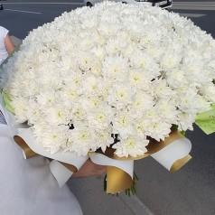 Букет белых хризантем 51