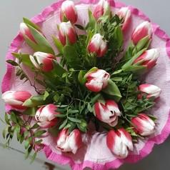 Тюльпаны Биколор