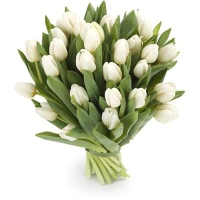 Букет тюльпанов Белоснежный