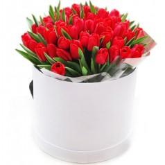 """""""Катерина"""" Тюльпаны красные 35 шт"""