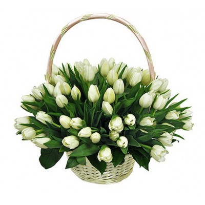 "Цветы ""Премьер"" Тюльпаны белые 51 шт"