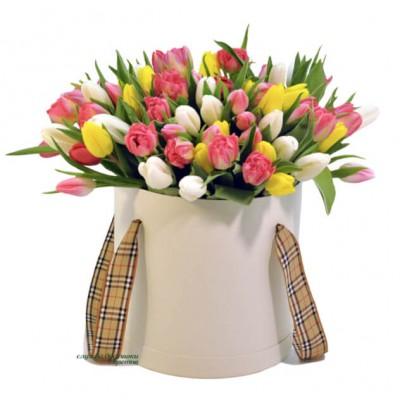 """""""Молодило"""" Тюльпаны разноцветные"""