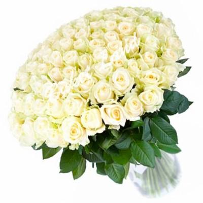 Розы Венделла (51 шт)