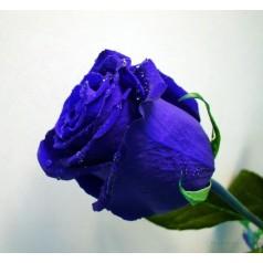 Акция Синяя роза 1 шт