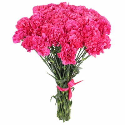 Гвоздика Розовые