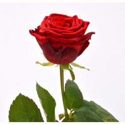 Акция Красные розы