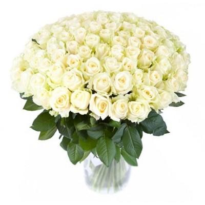 Розы белые 101 шт