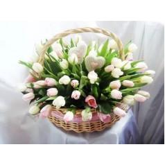 Маклейа Тюльпаны