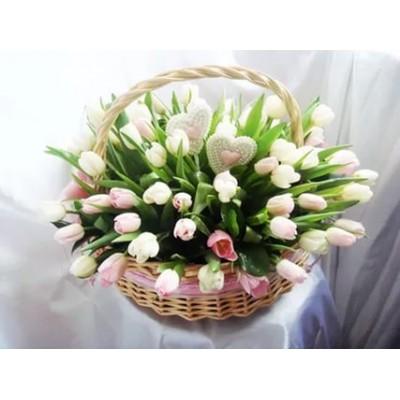 Маклейа Тюльпаны 61 штука