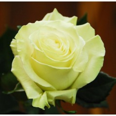 Мондиаль Пятерка (1 роза)