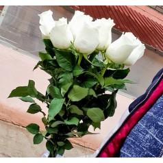 """Букет белые розы """"Альба"""" 9 шт"""
