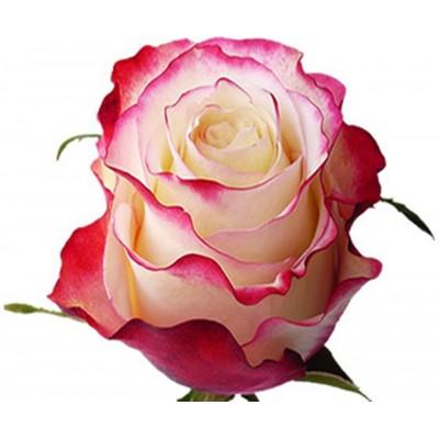 Свитнесс (1 роза)